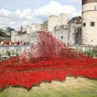 Poppy Exhibition at the Tower of London