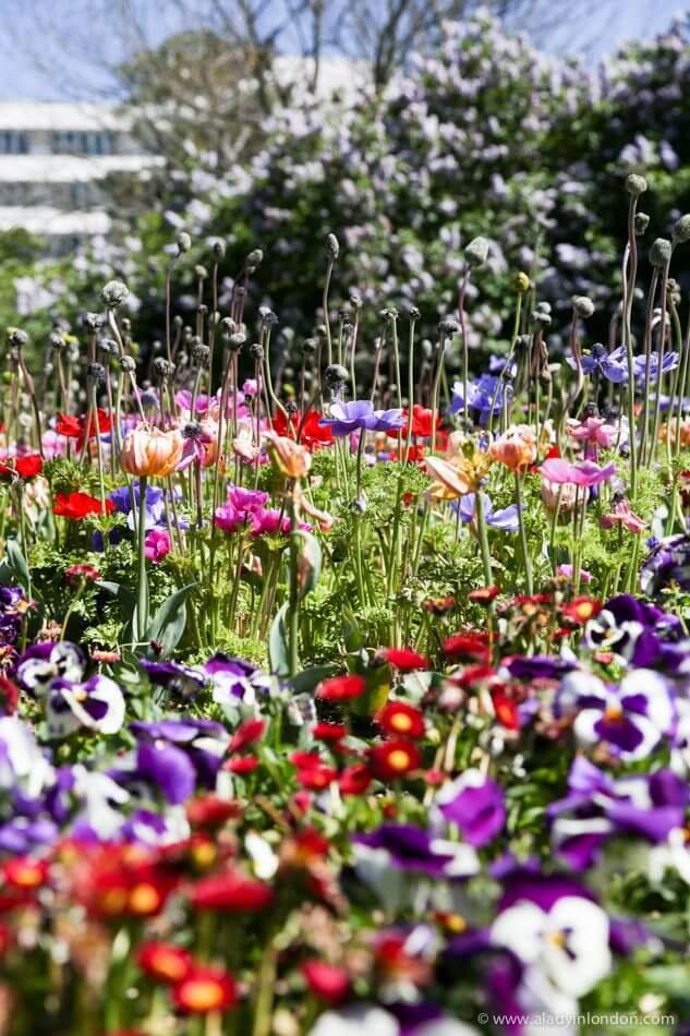 Botanic Gardens, Christchurch, New Zealand
