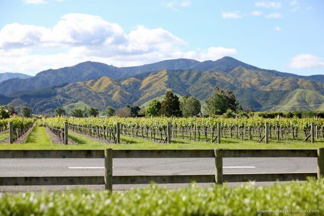 Vineyards in Marlborough, New Zealand