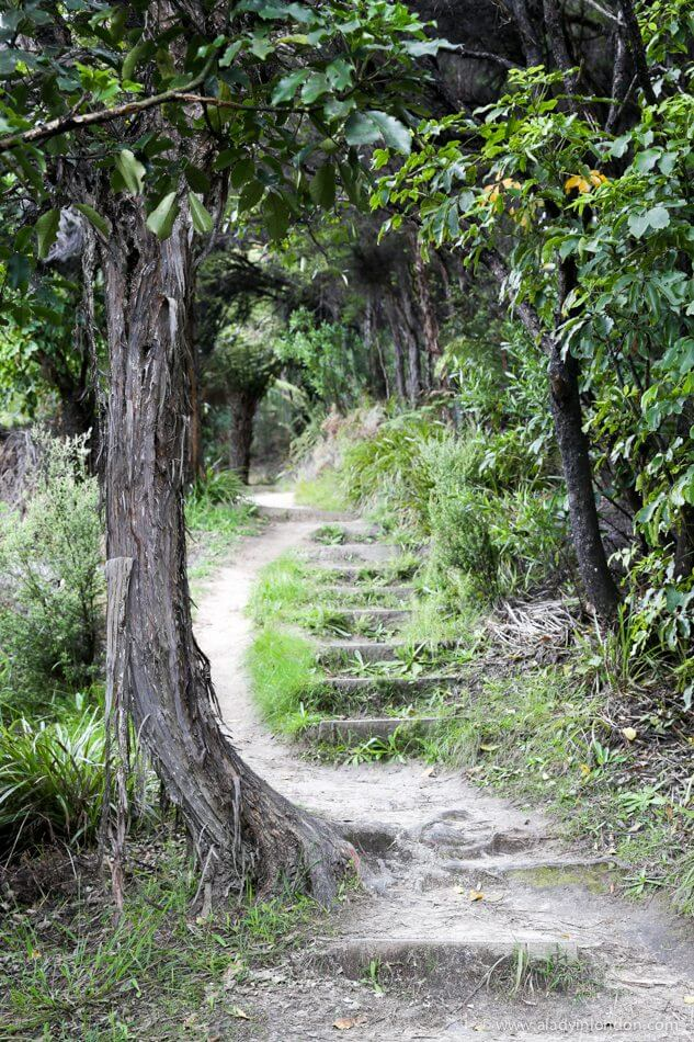 Hiking Trail, Picton, New Zealand