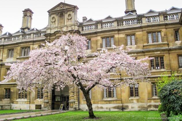 Spring in Cambridge, England