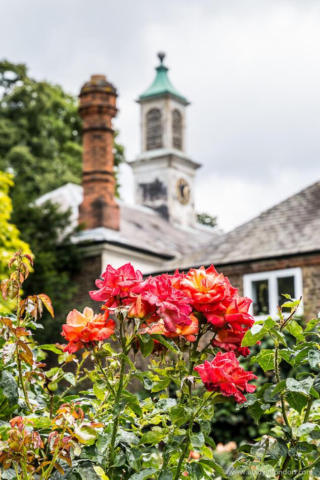 Holland Park Rose Garden