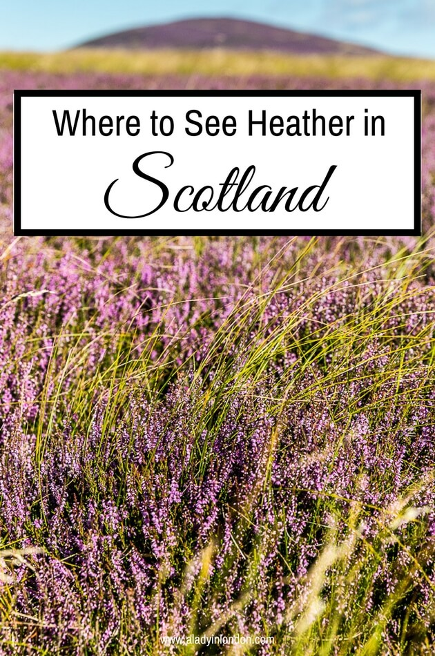 Where to See Heather in Scotland