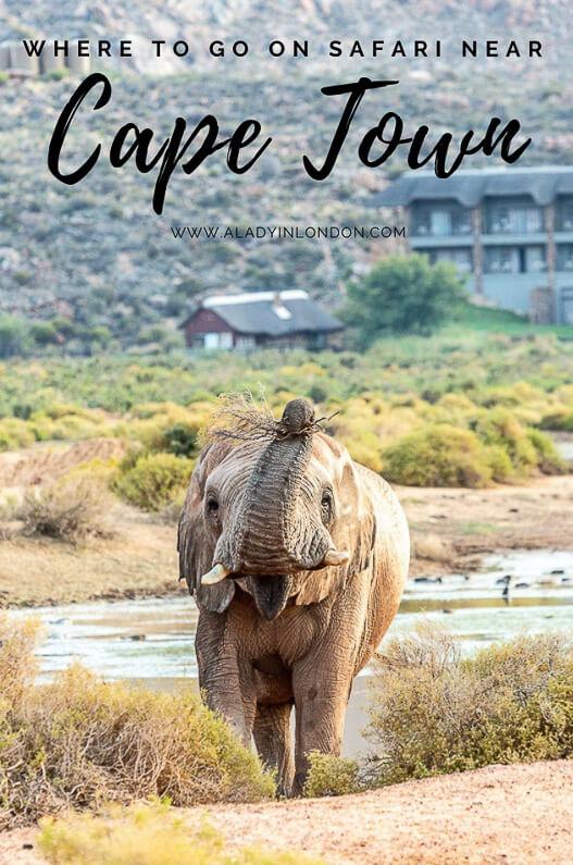 prix raisonnable mode couleurs délicates Game Reserve near Cape Town - Aquila Private Game Reserve Review