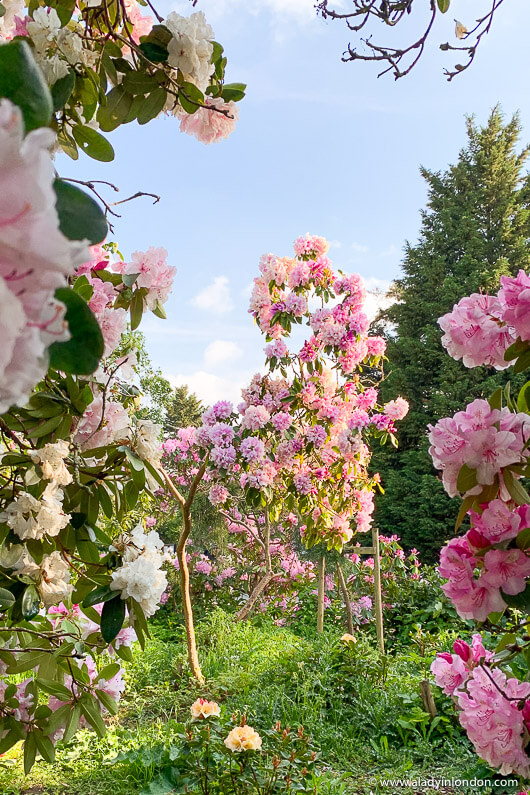 Dulwich Park American Garden