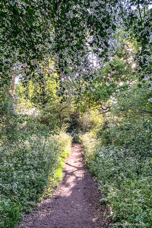 Dulwich Park Path